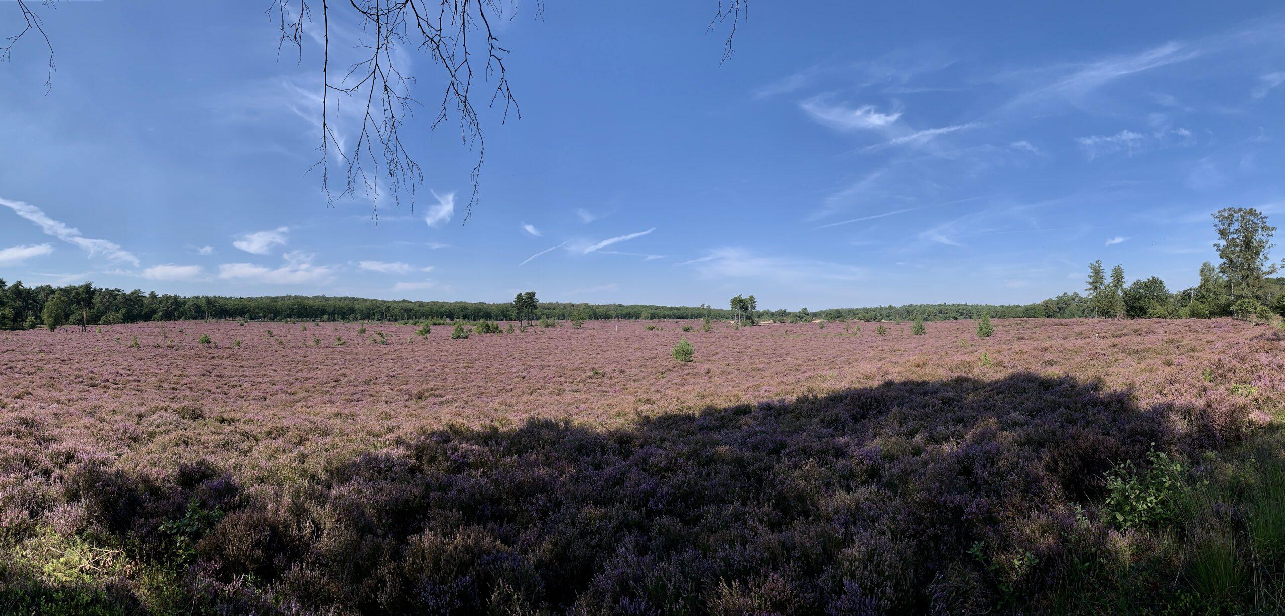 Heath land Leusderheide is surrounded by agricultural land. (c) Carien J. Touwen